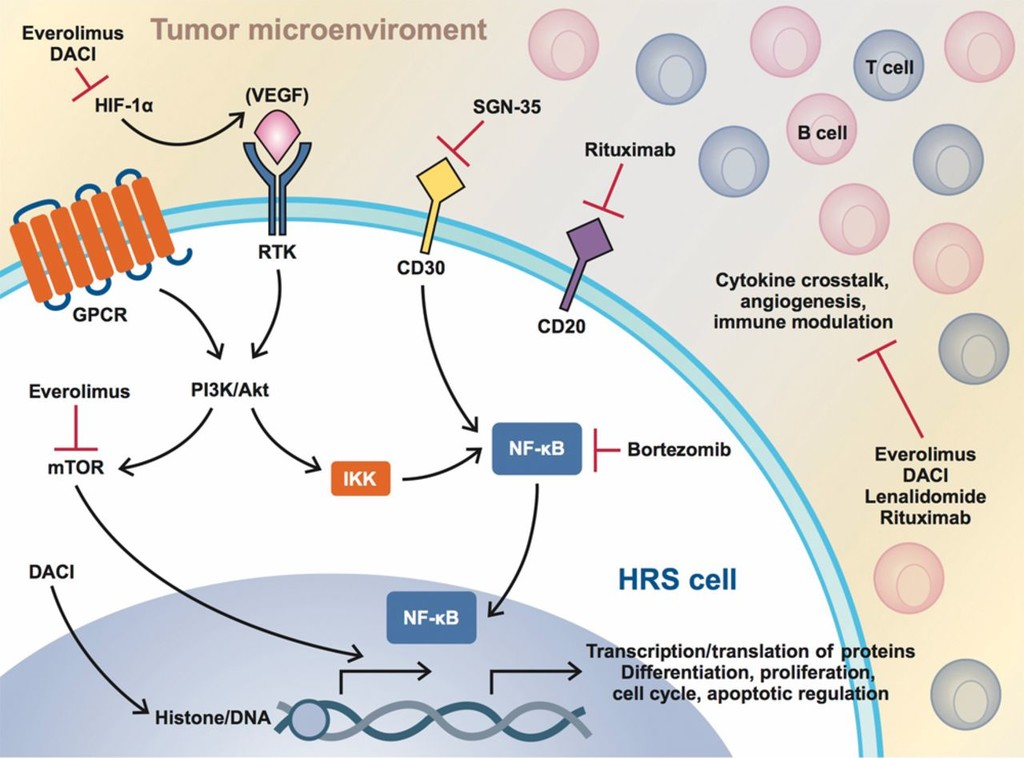Targeted Therapy in Relapsed Classical Hodgkin Lymphoma in