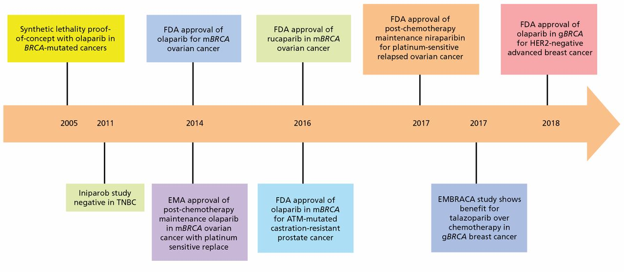 Resurrection of PARP Inhibitors in Breast Cancer in: Journal of the